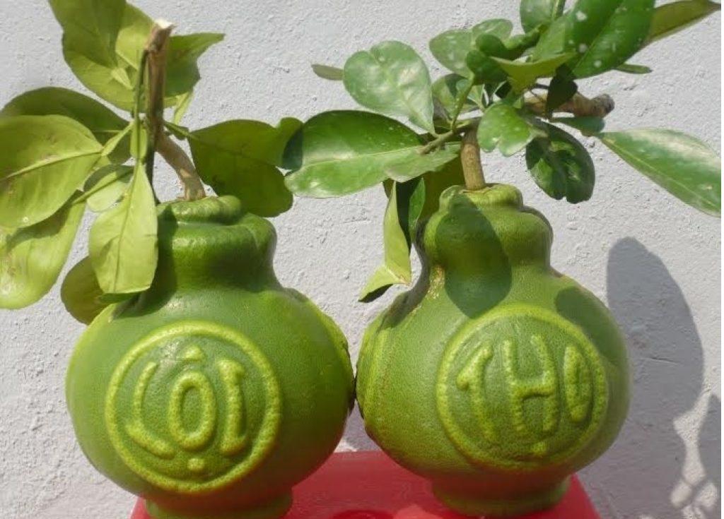 giỏ quà Tết trái cây