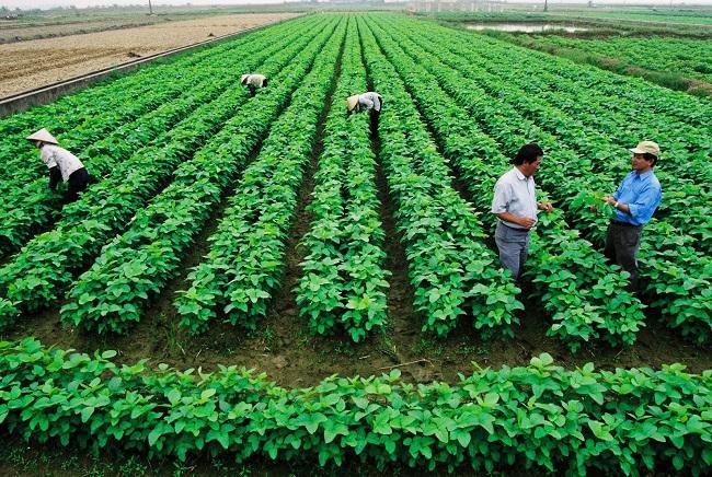 Cần có sự chuyển đổi từ nông nghiệp thuần túy sang nông nghiệp công nghệ cao để đáp ứng nhu cầu CPTPP