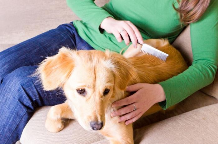 Dịch vụ chăm sóc thú cưng