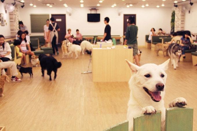 Kết hợp với dịch vụ chăm sóc thú cưng.